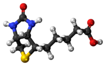Ball-and-stick model of the Biotin molecule