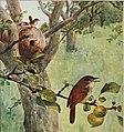 Bird-lore (1909) (14726677586).jpg