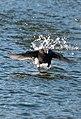Bird (40103808192).jpg