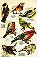 Birds of the world for young people (Pl. 16) (7971269082).jpg