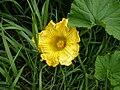 Blóm Flower.jpg