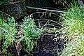 Black Hound Weir, Nuthurst paranormal site, West Sussex 3.jpg
