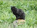 Black cat 1 (4).jpg