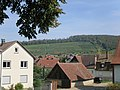 Blick von Pfaffenweiler in die Weinberge.jpg