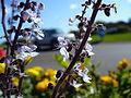 Blueflowers9.jpg