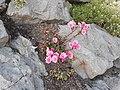 Blume 6.jpg