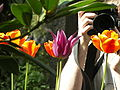 Blumenfotografen.jpg