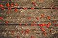 Boardwalk and Berries (10112833054).jpg