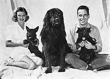Publicity photo of a smiling Bogart and Mayo Methot with their three dogs