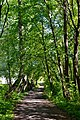 Boholiuby Lutskyi Volynska-Pershotravnevyi park-alley-3.jpg
