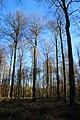 Bois de la Louvière - Livierenbos, Flobecq - Vloesberg 13.jpg