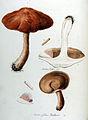 Boletus felleus — Flora Batava — Volume v10.jpg