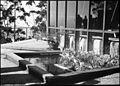 Bonsai tree and pond on a balcony (5139870087).jpg