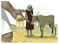 Book of Genesis Chapter 41-20 (Bible Illustrations by Sweet Media).jpg