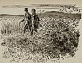 Bor-Ilustrace Adolfa Kašpara.jpg