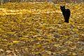 Bosco La Foresta, Rieti, autunno - gatto (2958106127).jpg
