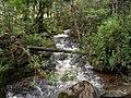 Bosque Andino Iguaque.JPG