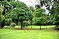 Botanic garden limbe67.jpg