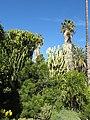 Botanical garden of Valencia 16.jpg
