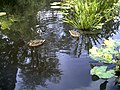 Botanischer Garten Freiburg - Botany Photography - panoramio (15).jpg
