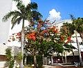 Boulevard Kukulcan, Zona Hotelera, Cancún, Mexico - panoramio (45).jpg