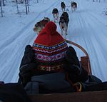 Boy on husky sled.JPG