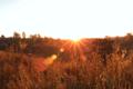 BrachterWald bei Sonnenaufgang08.png