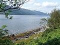 Bracken on the shore of Loch Striven - geograph.org.uk - 2532775.jpg