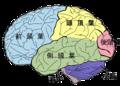 Brain diagram ja.png