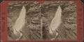 Bridal Vail, Havana Glen, by Crum, R. D., fl. 1870-1879.png