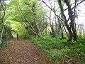 Bridleway in Little Wood - geograph.org.uk - 1028336.jpg