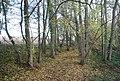 Bridleway through Tinley Lodge Toll - geograph.org.uk - 1576077.jpg
