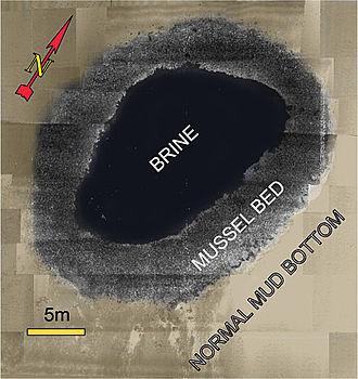 Brine pool - NOAA rendering of a brine pool in the Gulf of Mexico.