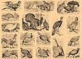 Brockhaus and Efron Encyclopedic Dictionary b33 074-0.jpg