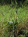 Bromélia no chão 2.jpg