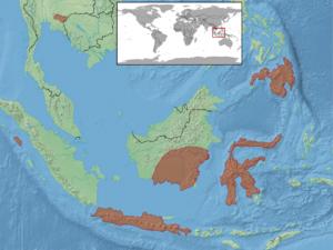Bronchocela jubata - Image: Bronchocela jubata distribution
