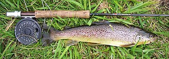 Fly fishing - Fly rod and reel with a brown trout from a chalk stream in England