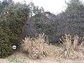 Buckner Street South 327, Prospect Hill SA.jpg