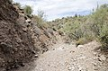 Butcher Jones Trail to Pinter's Point Loop, Tonto National Park, Saguaro Lake, Ft. McDowell, AZ - panoramio (157).jpg