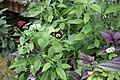 Butterfly Rainforest FMNH 09.jpg