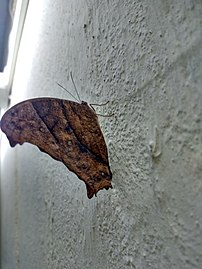 Butterfly hostel 05.jpg