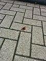 Butterfly on street 3.jpg