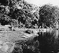 COLLECTIE TROPENMUSEUM Een groep zware Benda (artocarpus) bomen aan het meer van welakah Oost-Java TMnr 10006188.jpg
