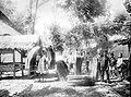 COLLECTIE TROPENMUSEUM In dessa Radjapolah in het district Tasikmalaja worden gesneden pandanbladeren klaar gemaakt voor transport West-Java TMnr 10011542.jpg
