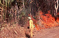 CSIRO ScienceImage 331 Testing Fire Intensity.jpg