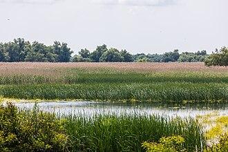 Danube Delta - Danube Delta in Romania