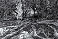Cachoeira do Macacú (15369957626).jpg