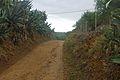 Camí de Riudoms a Castellvell.jpg