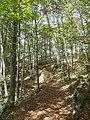 Camminado nel bosco M. Lefre 1.jpg