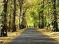 Camperdown Country Park - geograph.org.uk - 9931.jpg